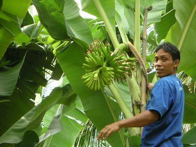 【バナナの花 その6】