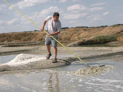 次に塩田の床に結晶する塩(グロ・セル-粗塩-と呼ばれます)をラスと呼ばれる木製の長細いへらのようなもので、かき集めます。