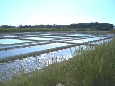 海水はいくつかのファール(濃縮池)を巡っていくうち、蒸発が促進されます。
